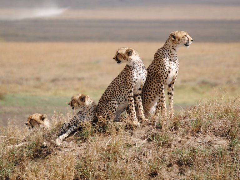 Serengeti National Park #BT Explorer