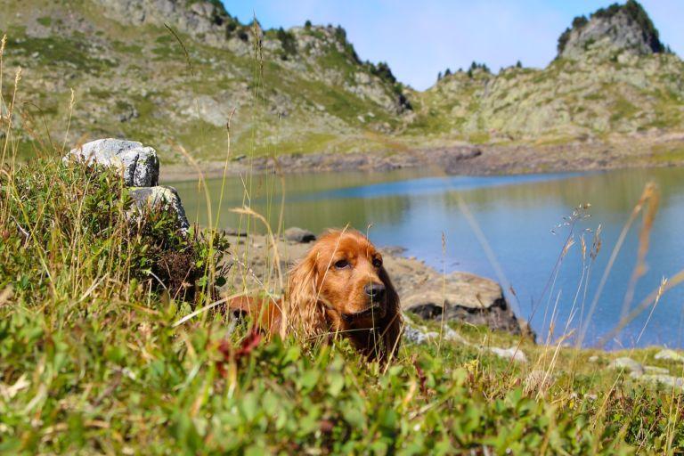 In vacanza con il cane.jpg 2
